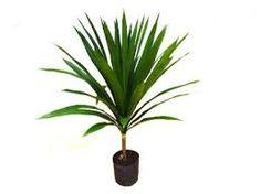 Resultado de imagem para palmeira arborea