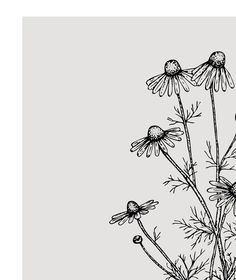 Chamomile print - Herbs art print - Kitchen decor - Herbs and plants - Kitchen printable - Gr. : Chamomile print - Herbs art print - Kitchen decor - Herbs and plants - Kitchen printable - Grey monochrome - Sketch art prints - Poster - - Doodle Drawings, Doodle Art, Herb Art, Art Du Croquis, Foto Poster, Illustration Blume, Simple Doodles, Plant Drawing, Flower Doodles