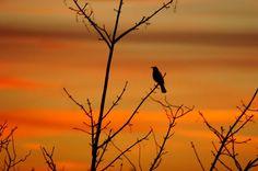 sunrise on ArranLand