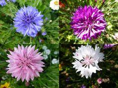 Hledat v článcích: výsev Plants, Lawn And Garden, Plant, Planets