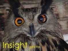 Nature Insight http://insight.altervista.org/nature/