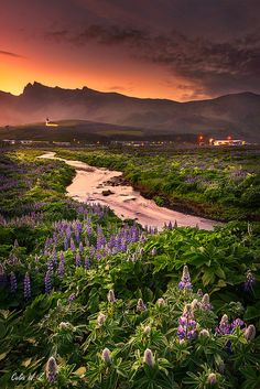 ICELAND - Vik Town under midnight lights -- Vik is a charming town located on the main ring road, being the southernmost village in Iceland,