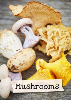 Want to learn more about mushrooms? Sign up for Jamie Oliver's Kitchen Garden Project at http://www.jamieskitchengarden.org/!
