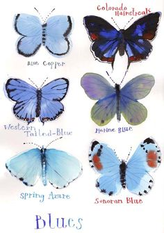 rebecca_pp_butterfliesblueweb