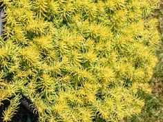 80 Y E L L O W Ideas In 2021 Plants Yellow Flowers Garden Design