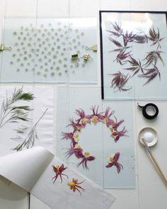 Pressade blommor mellan glas