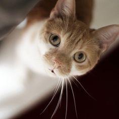 Aki Cat | Pawshake