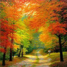 Autumn woods, Netherlands ♥