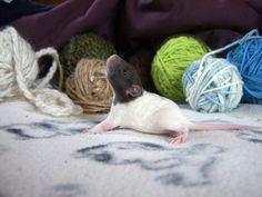 rats <3 yarn