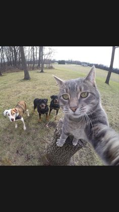 Funny Animal Videos, Animal Memes, Funny Animals, Cute Animals, Funny Cute Cats, Cool Cats, Funny Cat Photos, Funny Pictures, Pet Dogs