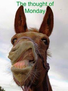 Is this the donkey Elvis impersonation? Animals And Pets, Baby Animals, Funny Animals, Cute Animals, Monday Humor, Monday Monday, Thursday Quotes, Weekend Quotes, Monday Quotes