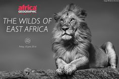 These magical black & white images of Kenya and Tanzania by Federico Veronesi will have you contacting us to arrange your next African safari Tanzania, Kenya, Black N White Images, Black And White, Cheetahs, African Safari, East Africa, Mammals, Places To Go