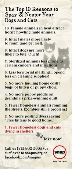 TOP 10 reasons to spay/neuter your pets