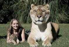 Aus 2 mach 1: Das sind die 7 verrücktesten Tier-Kreuzungen aus aller Welt!