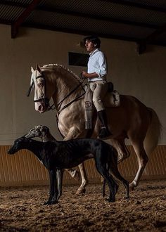 Horse back riding is primarily booked for the rich, people of all ages can try it. Majestic Horse, Beautiful Horses, Dressage, Andalusian Horse, Friesian Horse, Arabian Horses, Horses And Dogs, Horse Sculpture, Clydesdale