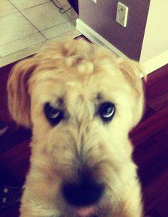 Puppy dog eyes <3