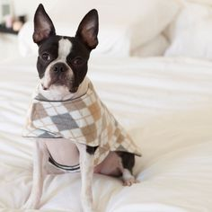 Argyle Dog Coat Beige and Gray (Small) - Free Shipping