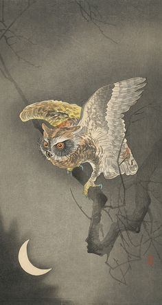 Ohara Koson ~ owl with wings spread a bit