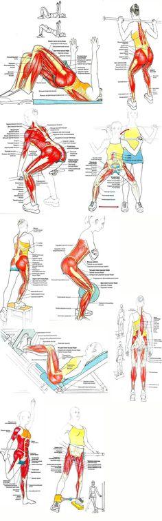 Полная прокачка ног и ягодиц в тренажерном зале! 10-15 повторений, вес комфортный для вас