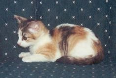 are male calico cats worth money?
