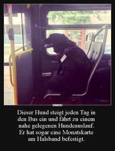 Dieser Hund steigt jeden Tag in den Bus ein und fährt zu..   Lustige Bilder, Sprüche, Witze, echt lustig