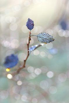 Winter light   Flickr - Photo Sharing!