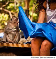Dirty monkey   Amazingly Timed Photos
