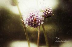 Trick of the light... #bug #fly #flowerart #flower #lights #mystic #shades #macroworld #macronature #macro_captures #naturelsker #naturelovers #perfectnature #instanature #natureaddict #natureart by stormtrooper_me