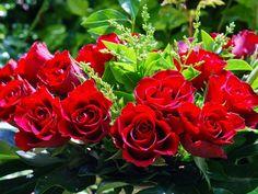 Resultado de imagen para jardines de rosas rojas y azules