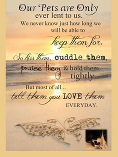 Motivational love life quotes sayings - daily quotes of the I Love Dogs, Puppy Love, Cute Dogs, Animal Quotes, Dog Quotes, Pet Loss Quotes, Pet Loss Grief, Dog Poems, Pet Remembrance