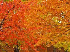 Pop Color Fall by Frank L Tunis