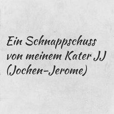 #katze #katzencontent #suess #jj