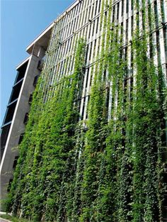 Muros Vegetales Sistema Jakob / Brimat