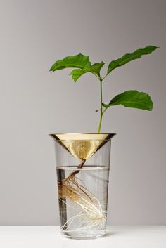 Cone plant support by Michael Anastassiades. Part of the Floating Forest Series, Svenkst Tenn