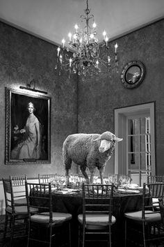 Exhibition: INCURIOUS (More than just portraits of Sheep)