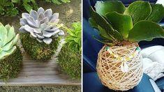 Kokedamas – Mis Jardines Tree Lighting, Tree Wall, Houseplants, Bonsai, Cactus, Orchids, Diy And Crafts, Green, Outdoor