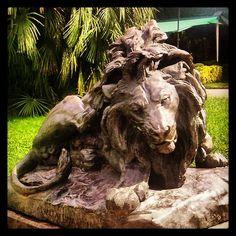 An afternoon at the Zoo #barcelona #zoo #barcelonazoo #lion #leon #leone #statue #park #parque #fun #ilovespain #bcn #barca #barceloneando #barcelonagram #instamood #instagood #animals #igbarcelona #maximocherry #barcelona3 #jazzmusic #jazz