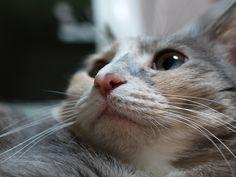 Cuty cat - OLYMPUS D