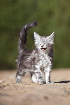 Katze Cat Chat Gatto * Fotografin Sandra Schürmans