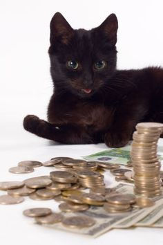 Cat Lady Beat IRS, Now Faces Feline Felony Cat Lady, Pets, Compassion, Faces, Animals, Animales, Animaux, The Face, Animal