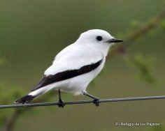 El refugio de los pájaros - Santa Rosa de Calamuchit, Còrdoba, Argentina