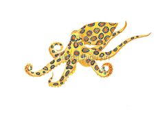 Watercolour Painting of an Australian Blue Ringed Octopus