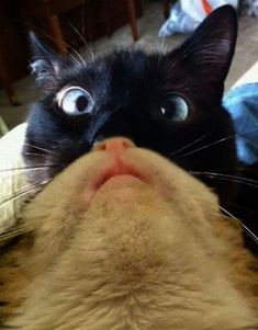 Astounding -> Funny Cat Photos #excellent