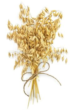 Sheaf of stalks of oats, tied with twine isolated on white background | Stock Photo | Colourbox on Colourbox