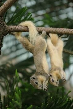 Upside down squirrels, the little cuties. :c)