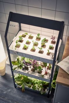 New from Ikea: A Hydroponic Countertop Garden Kit: Gardenista