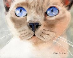 Tonkinese Tonk Siamese cat Art Print of a watercolor Painting Big Large Huge Girls Cat Lover Gift Lilac Platinum Point Applehead Traditional , Watercolor Cat, Watercolor Paintings, Cat Paintings, Watercolor Animals, Watercolors, Cat Lover Gifts, Cat Lovers, Rachel Parker, Tonkinese