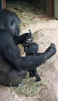 gorilla baby!