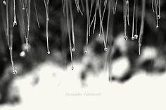 AlexandraValentovic / Po daždi II