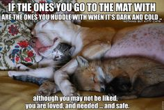 Awesome!!  Different animals sleeping together...